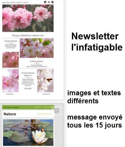 Animer un site web par les Newsletters